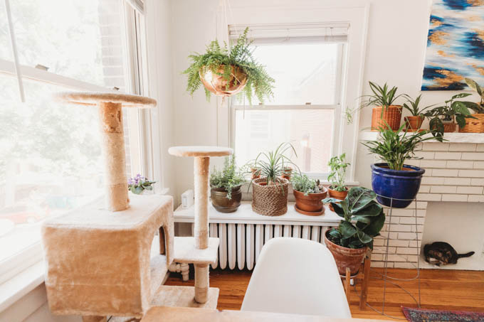 Check out my renter-friendly, affordable apartment makeover—from basic and beige to a bright, boho, modern space full of plants and DIYs!