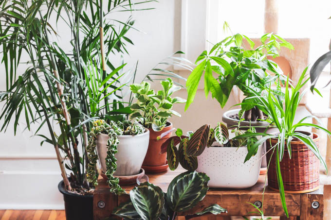 You can still fill your home with plants even if you have a dog or cat! Start with this list of the best pet friendly houseplants to keep your furry friends safe and to make your home beautiful.
