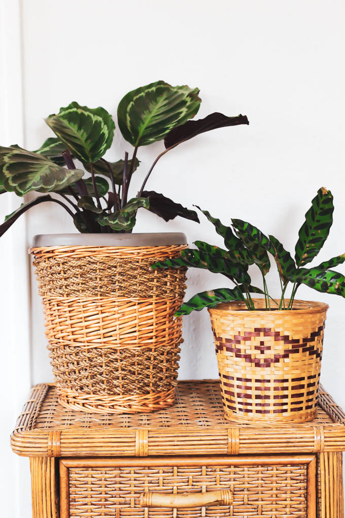 You can still fill your home with plants even if you have a dog or cat! Start with this list of the best pet friendly houseplants to keep your furry friends safeandto make your home beautiful.