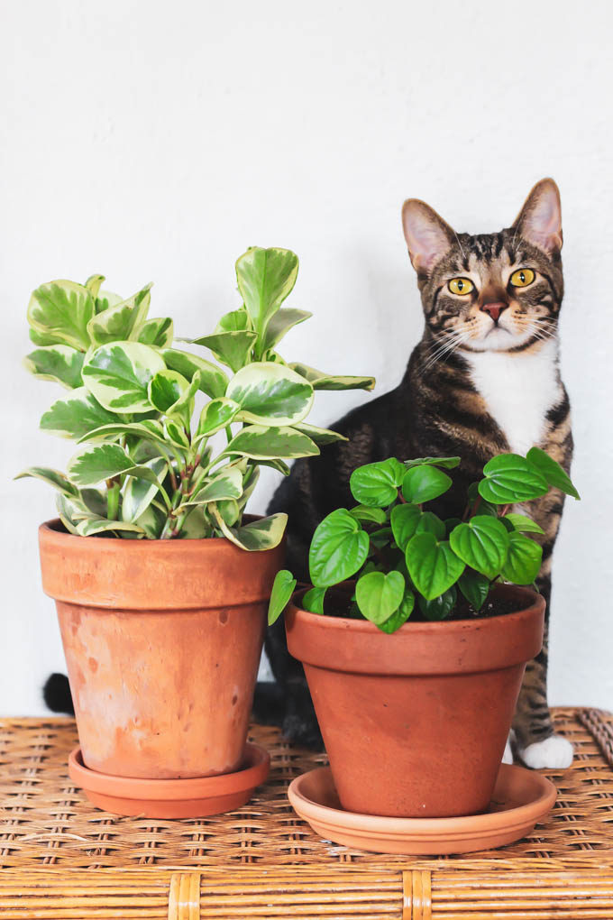 The Best Pet Friendly Houseplants Emilie Eats